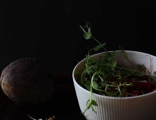Microgreens-Salat mit roter Bete